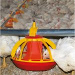 Automatic Pan Feeder for Broilers